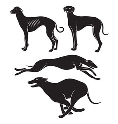 hounds vector image