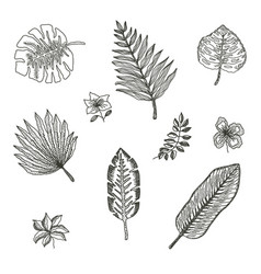 collection of black outline tropical leaves vector image