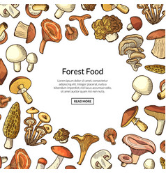 hand drawn mushrooms background with place vector image