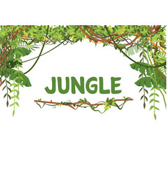 jungle exotic leaves and lianes background vector image