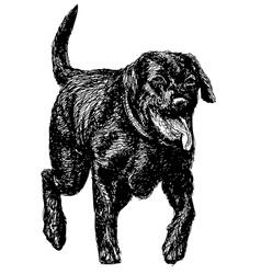 Labrador Retriever 02 vector image