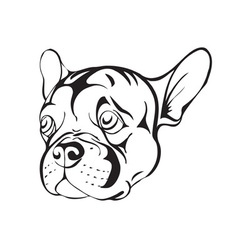 sad french bulldog vector image vector image