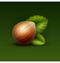 Full Unpeeled Hazelnut with Leaves vector image