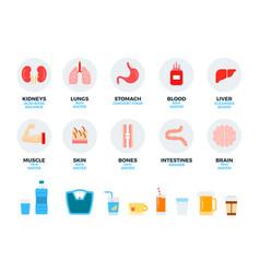 parts human body and internal organs water vector image