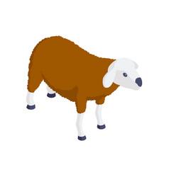 sheep isometric icon vector image