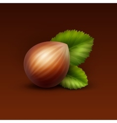Full unpeeled hazelnut with leaves vector