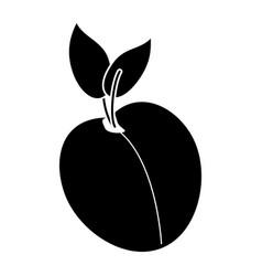 apricot fruit nutrition pictogram vector image vector image