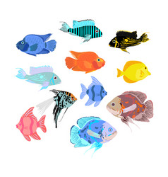 Aquarium exotic fish collection under water world vector