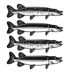 pike fish set of four styles vector image