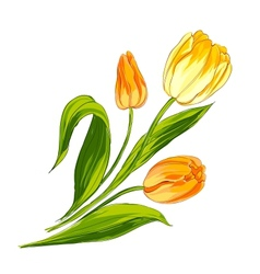 Tulip bouquet vector