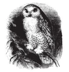 White owl vintage vector