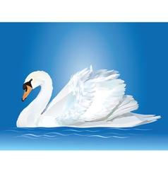 white swan vector image