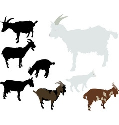 Goats vs vector image vector image