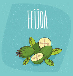 isolated ripe pineapple guava fruits or feijoa vector image