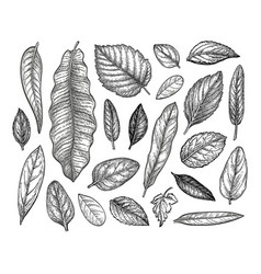 leaves set ink sketch vector image