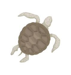 Turtle tortoise reptile animal top view vector