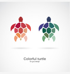 two colorful turtles on white background wild vector image