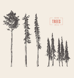 Set pine trees engraved style drawn vector