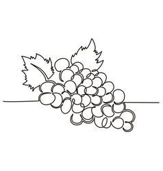 a bunch grapes berries drawn in one line vector image