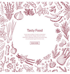 Hand drawn herbs and spices background vector