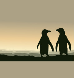 silhouette penguin at sunset scenery vector image