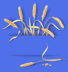 wheat ears on blue vector image