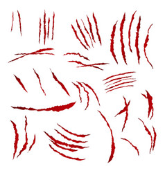 claws scratches isolated on white vector image