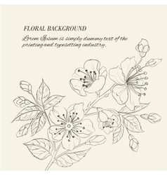 Scatch of spring sakura vector image vector image