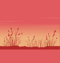 At sunrise with coarse grass scenery silhouettes vector