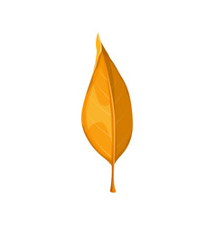 Autumn leaf yellow fall isolated orange leaves vector