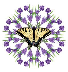 Purple crocus flowers vector