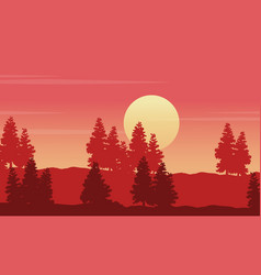 Silhouette of spruce on hill at sunset scenery vector