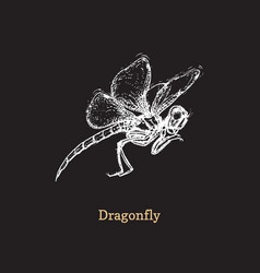 flying dragonfly on black vector image