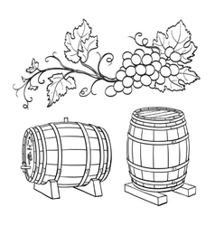 Grape branches and wine barrels vector