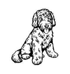 Labradoodle mix dog - isolated vector