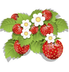 strawberry bush vector image vector image
