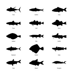 set of silhouettes of fishes vector image vector image