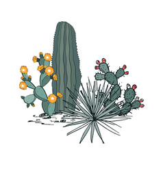 decorative composition composed groups cacti vector image