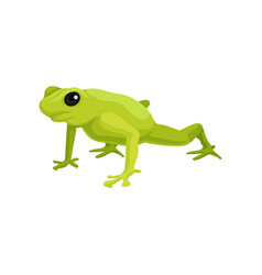 Green frog amphibian animal on vector