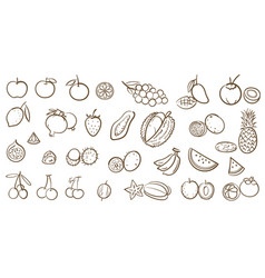 Mix fruits and tropical fruits collection line vector