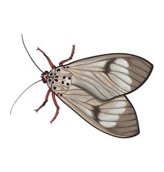 Top view of gray moth isolated sketch style vector image