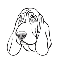 Dog breed basset head vector image