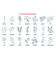Best herbs that lower high blood pressure vector