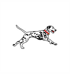 dalmatian dog run vector image