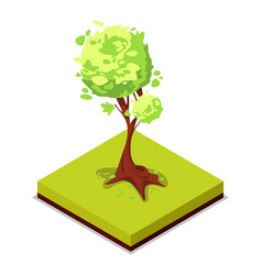 Green ash tree isometric 3d icon vector