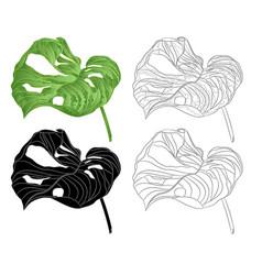 tropical plant sheet of monstera deliciosa vector image