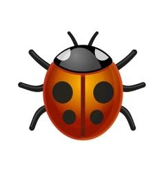 Ladybird Bug on White Background vector image