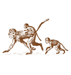 monkeys or humanoid wild animals family in nature vector image vector image