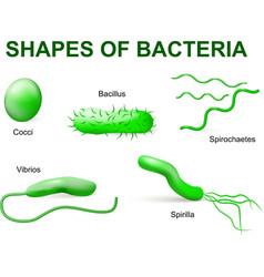 Bacteria tip2 vector