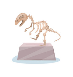 dinosaur skeleton on gray stand ancient museum vector image